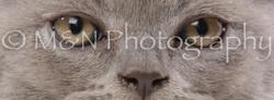 M&N Photography -DSC_8820