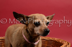M&N Photography -DSC_8664