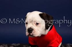 M&N Photography -IMG_4682