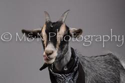 M&N Photography -DSC_2469