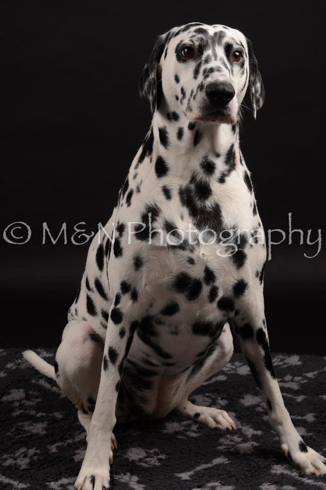 M&N Photography -DSC_9615