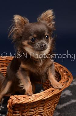 M&N Photography -DSC_0354