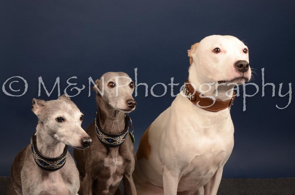 M&N Photography -DSC_4622