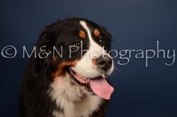 M&N Photography -DSC_3797
