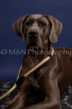 M&N Photography -IMG_4612