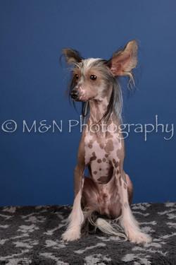 M&N Photography -DSC_5186