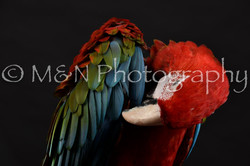 M&N Photography -DSC_2695