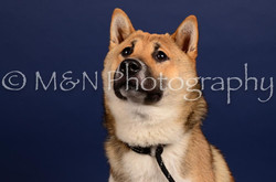 M&N Photography -IMG_4760