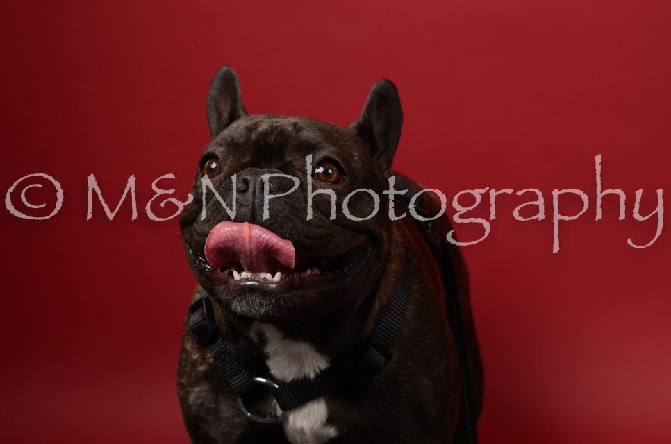 M&N Photography -DSC_6772
