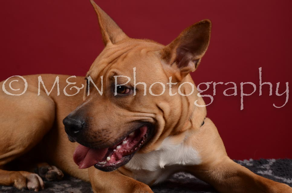 M&N Photography -DSC_3197