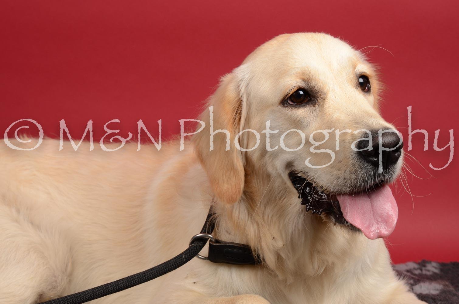 M&N Photography -DSC_8634