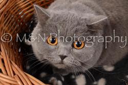 M&N Photography -DSC_6848