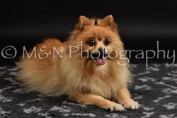 M&N Photography -DSC_2597