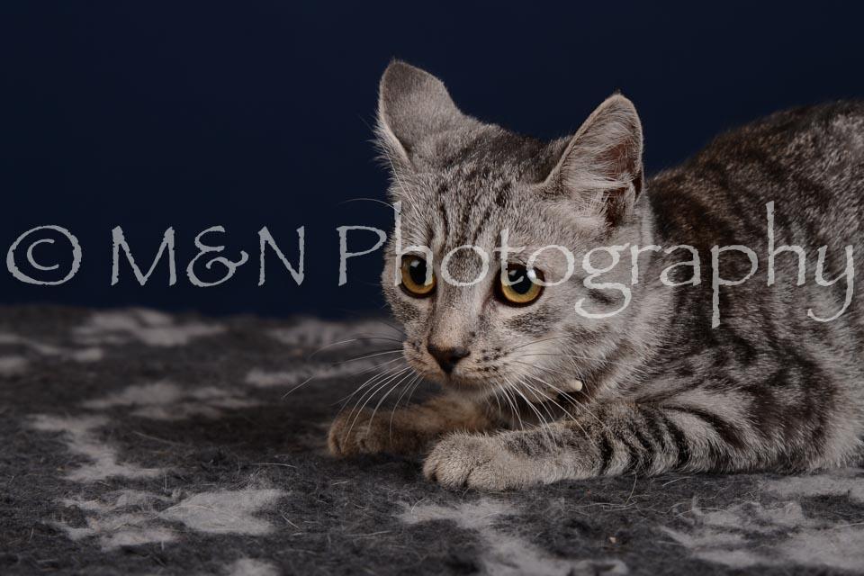 M&N Photography -DSC_4263