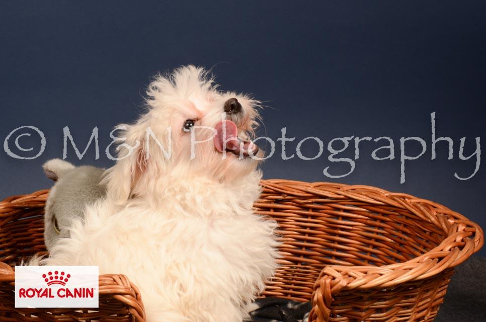 M&N Photography -DSC_4415-2