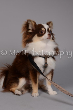 M&N Photography -DSC_2492