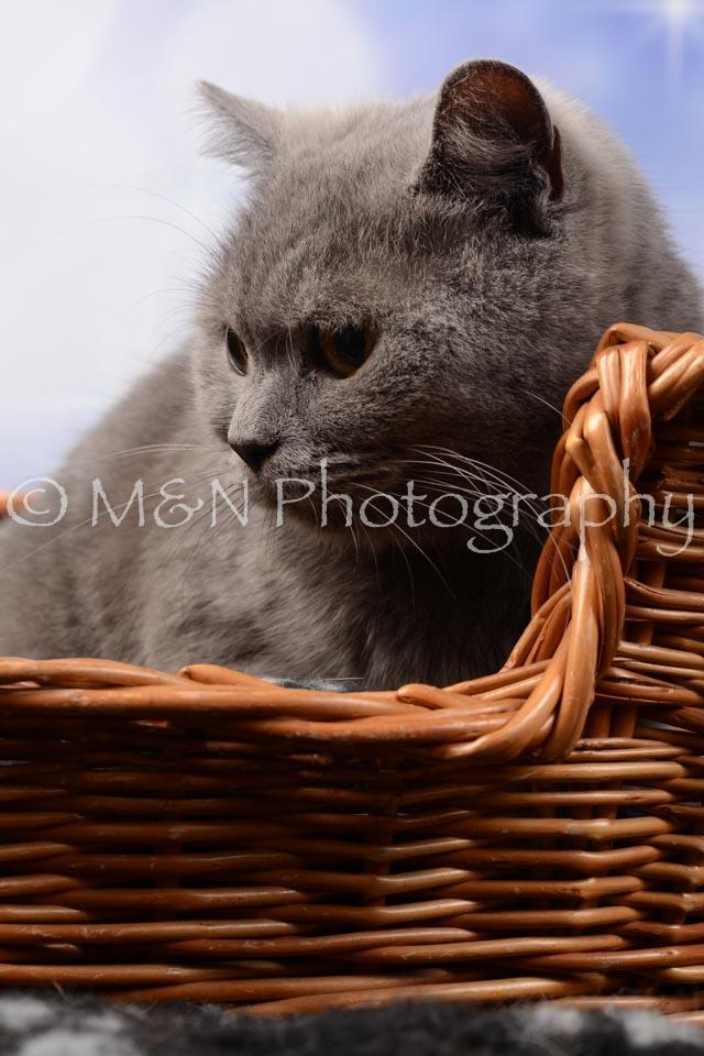 M&N Photography -DSC_6988