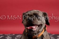 M&N Photography -DSC_8495