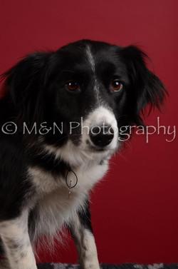 M&N Photography -DSC_3454