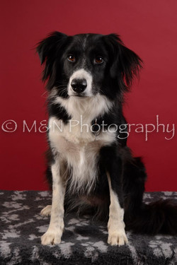 M&N Photography -DSC_3473
