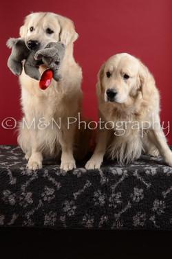 M&N Photography -DSC_3485