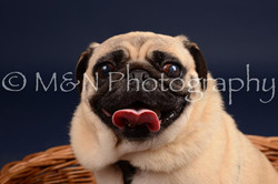 M&N Photography -DSC_0337