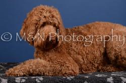 M&N Photography -DSC_4963