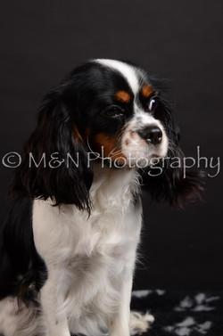 M&N Photography -DSC_5438