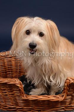 M&N Photography -DSC_0833