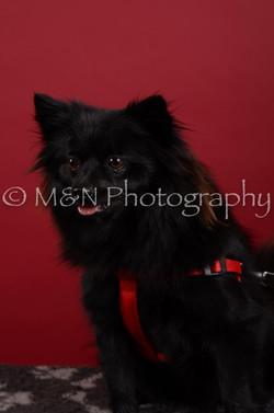 M&N Photography -DSC_3121