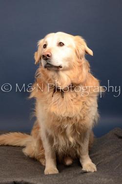 M&N Photography -DSC_4259