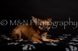 M&N Photography -DSC_5736