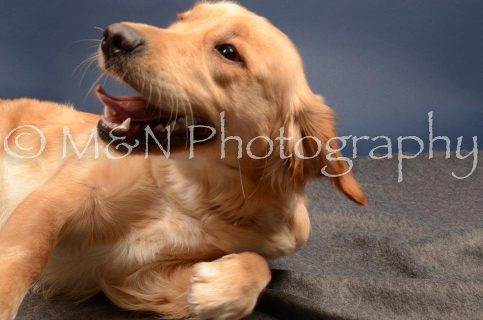 M&N Photography -DSC_4150
