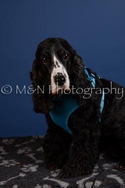 M&N Photography -DSC_5103