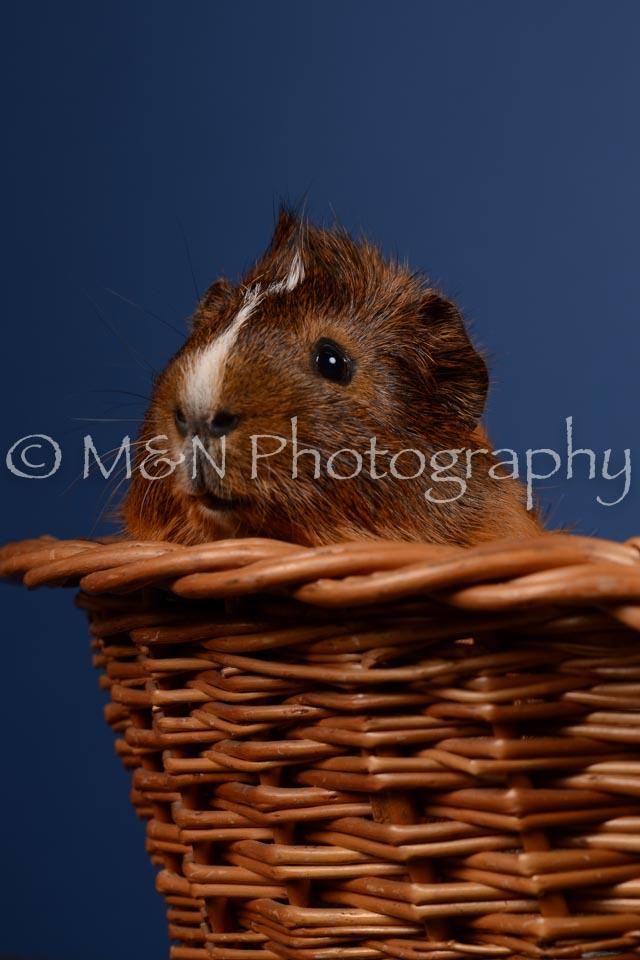 M&N Photography -DSC_5091