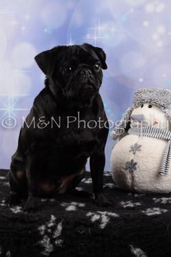 M&N Photography -DSC_6603