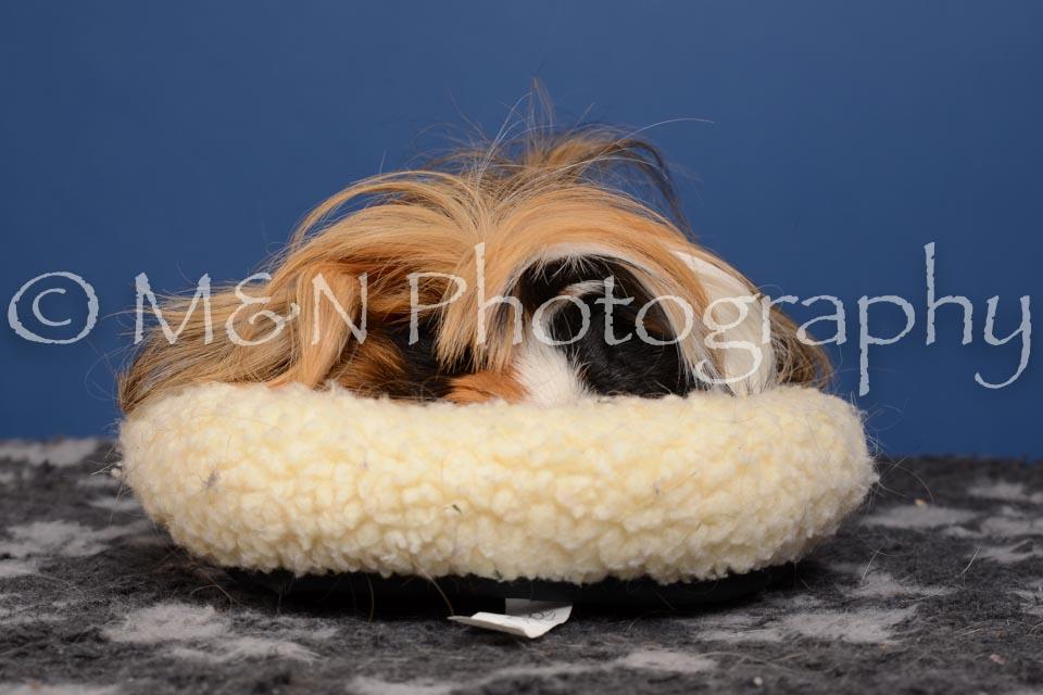M&N Photography -DSC_5337