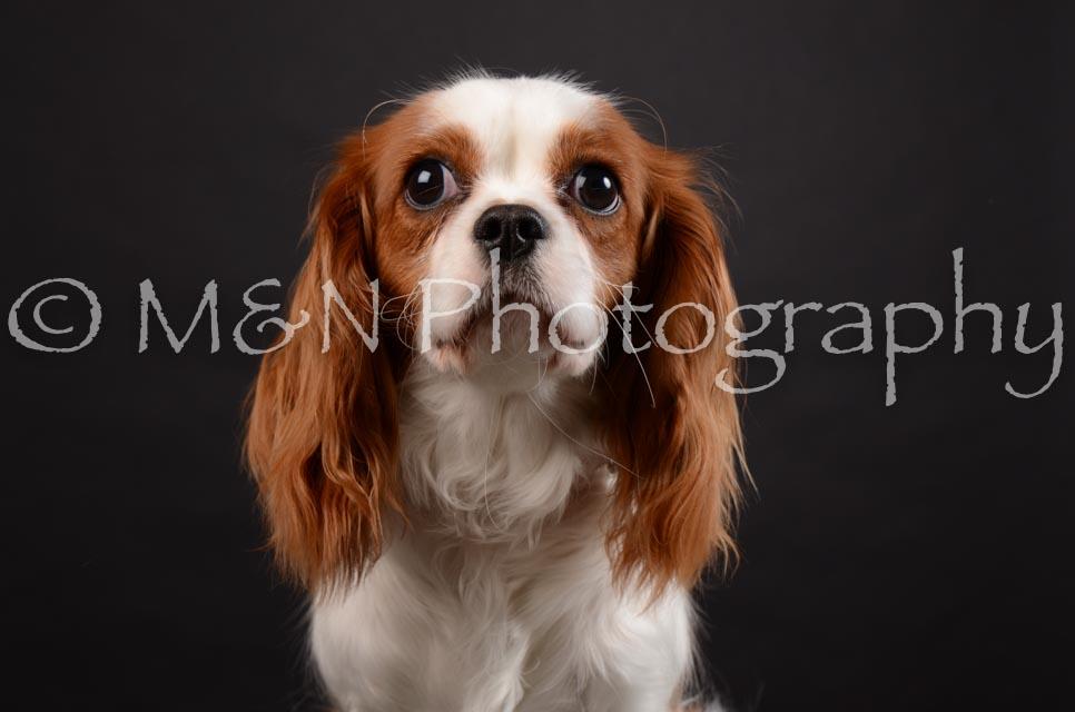 M&N Photography -DSC_5427