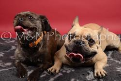 M&N Photography -DSC_8501