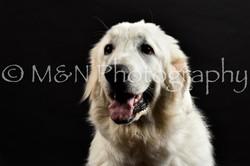 M&N Photography -DSC_2420
