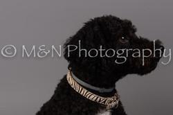M&N Photography -DSC_2406