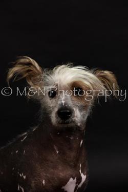 M&N Photography -DSC_2497