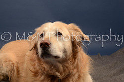 M&N Photography -DSC_4258