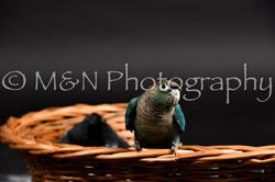 M&N Photography -DSC_2453