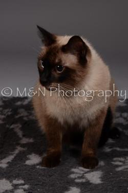 M&N Photography -DSC_2260