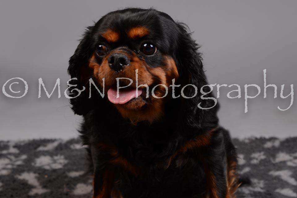M&N Photography -DSC_2593
