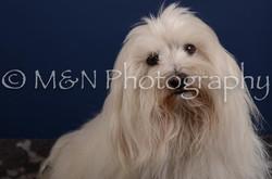 M&N Photography -DSC_4123