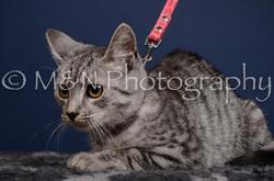 M&N Photography -DSC_4271