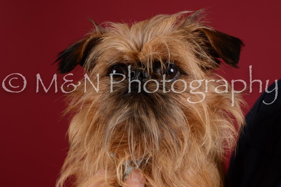 M&N Photography -DSC_3302