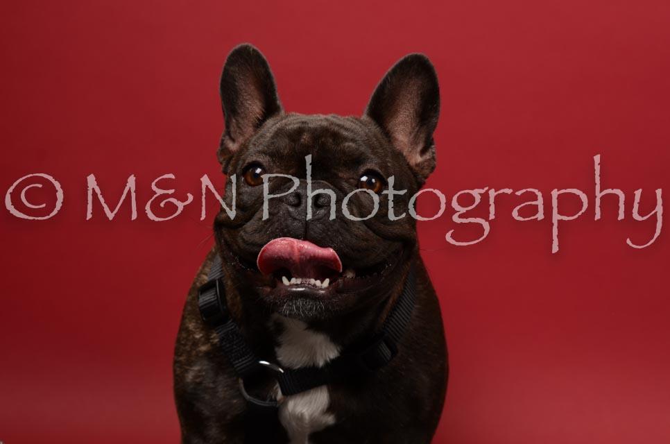 M&N Photography -DSC_6774